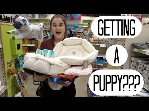 ARE WE GETTING A PUPPY????