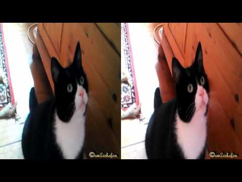 3d stereoscopic video Side by Side cat kitty kitten Katze Kätzchen