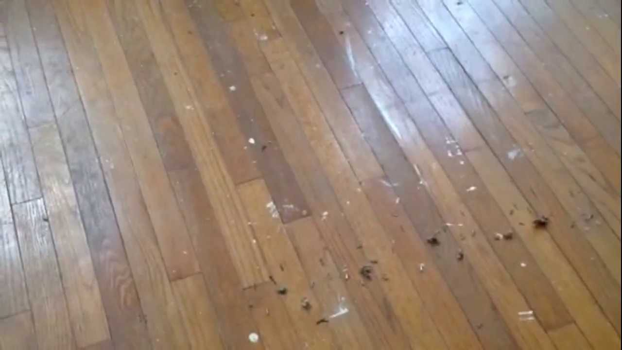 How To Refinish Your Hardwood Floors Without Sanding Youtube