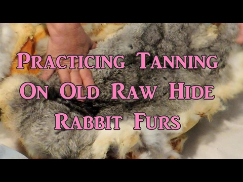 Practicing Tanning on Raw Hide Rabbit Furs