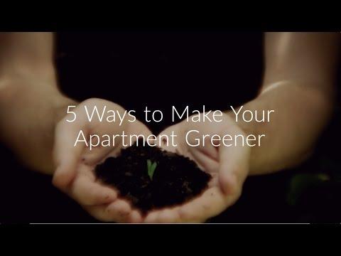 5 Ways to Make Your Apartment Greener