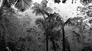 Tropical Rain Sound | BLACK SCREEN | Sleep, Study, Meditate, Relax