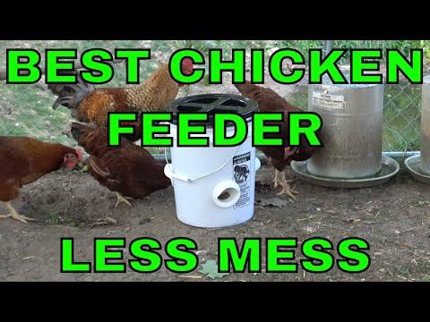 A Better Chicken Feeder Option