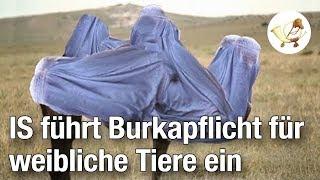 Burkapflicht für weibliche Tiere eingeführt