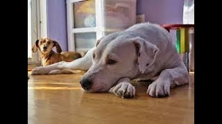 Funniest Animals Try Not To Laugh