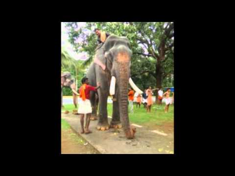Top 15 ELEPHANTS in Kerala. - YouTube