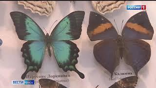 В Омском краеведческом музее открылась выставка насекомых