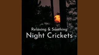 Ambient Sounds of the Forest at Night, Pt. 3