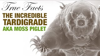 True Facts: The Incredible Tardigrade