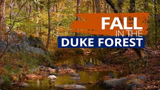 Fall in the Duke Forest video