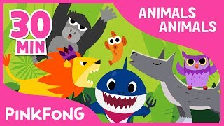 Animals, Animals | Baby Shark and More | +Compilation | Animal Songs | Pinkfong Songs for Children