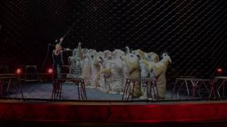 Ringling Brothers, Barnum Bailey Circus