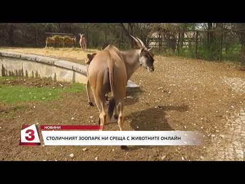 Всеки ден зоопаркът в София ни среща с животни онлайн