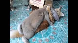 Clip hài 24h - Con thỏ chịch mèo :P