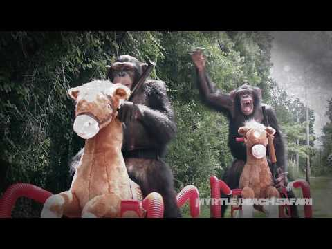 """Chimps from Myrtle Beach Safari Attend """"War for the Planet of the Apes"""" Premiere"""