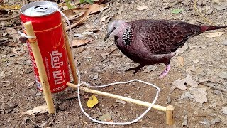 Amazing Quick Bird Trap From Cans Coca-Cola