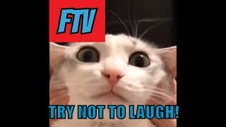 Funny Animals Videos | Try Not To Laugh Funny Animals Videos Compilation #1 Funny Vines (2019)