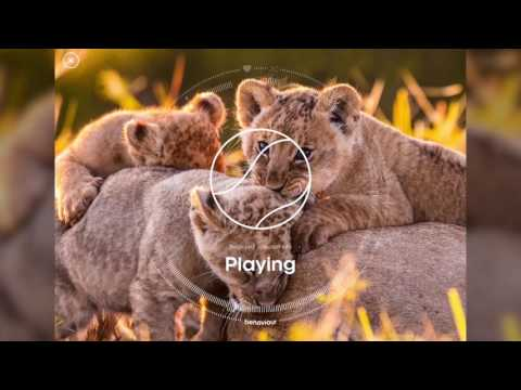 BBC Earth – Story of Life