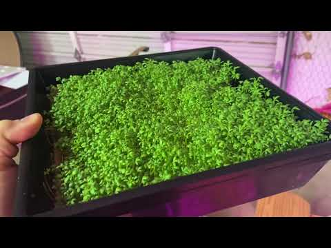 Ebb and Flow MicroGreens Success - New Home Scale Indoor Vertical Hydroponics Farm - Part Six