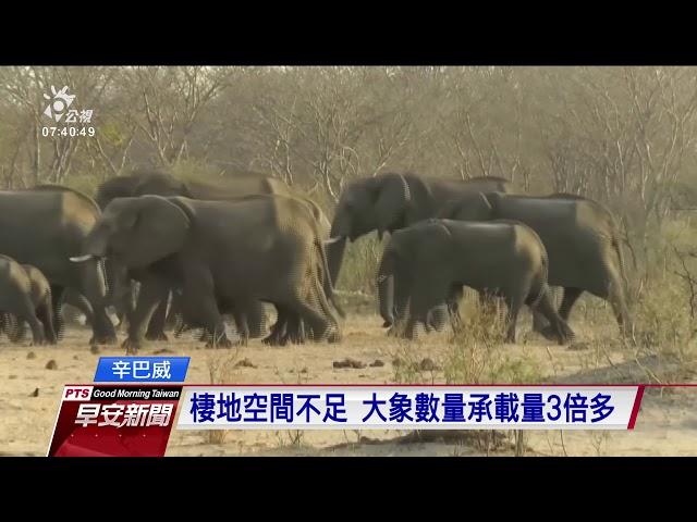 辛巴威乾旱嚴重 已有55頭大象餓死