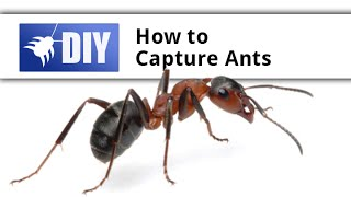 Capturing an Ant with a Marker Circle - Ant Pheromone Experiment