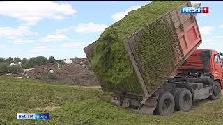 Миллион тонн зерна намолотили омские аграрии