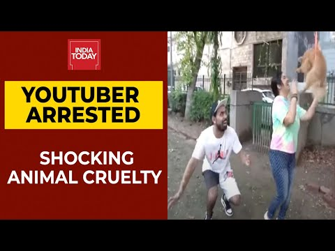 YouTuber makes pet dog fly using balloons in video, arrested for animal cruelty