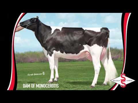 7HO11839 MONOCEROTIS