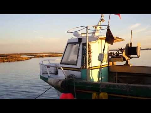 Le Bassin de Marennes, entre terre et mer...