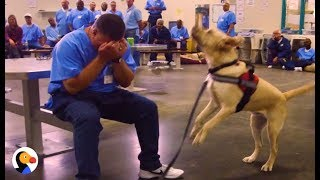 Dogs in Prison Train To Be PTSD Service Animals | The Dodo