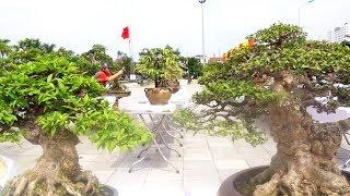 Bonsai nhỏ nhất ở triển lãm nhìn phê - small bonsai trees at bonsai exhibition