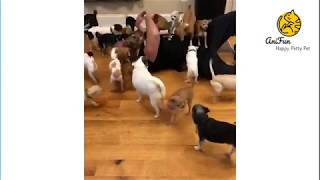 ✅ Man Attacked By School Of Puppy | Best Dog Funny Moment 2019