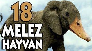 Gerçekten Var Olduklarına İnanamayacağınız 18 Melez Hayvan! (ÖRDEK BAŞLI FİL?!)
