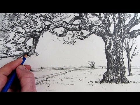 How To Draw A Tree: Narrated step by step - YouTube