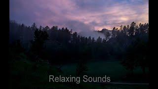 2 HOURS Mockingbird Sounds   Study   Sleep   Meditation