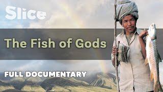 The Fish of Gods I SLICE I Full documentary