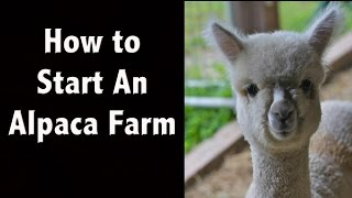 How to Start an Alpaca Farm - Greenfield - New Hampshire Tourism
