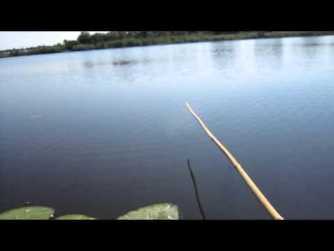 Карась. Рыбалка на Южном Буге.
