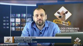 A situação atual da Raça Jersey no Brasil  - PGM JERSEY BRASIL #1