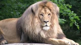 Leon rey