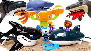 Shark Attack~! Octonauts GUP-O Rescue Sea Creatures With Orca - ToyMart TV