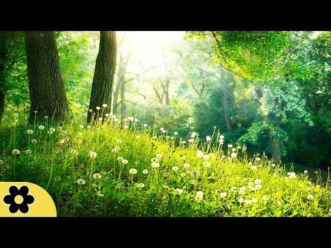 Healing Meditation Music, Soothing Music, Relaxing Music Meditation, Binaural Beats, ✿3243C