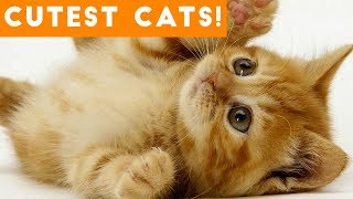 Ultimate Cute and Funny Cat Compilation 2018 | Funny Pet Videos