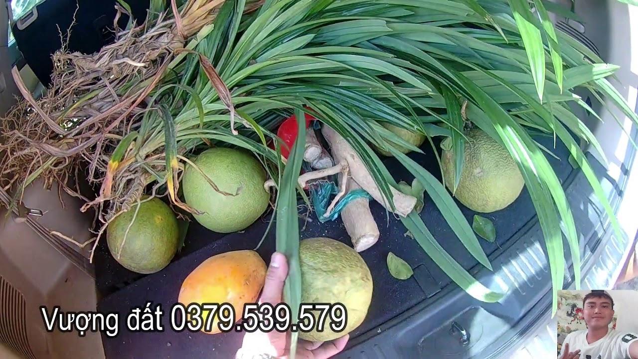 Rẻ gấp vườn chôm chôm 8000m2 tại xã Phú Lý, Vĩnh Cửu, Đồng Nai, Vượng đất: 0379.539.579 video