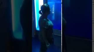shark breaks aquarium glass