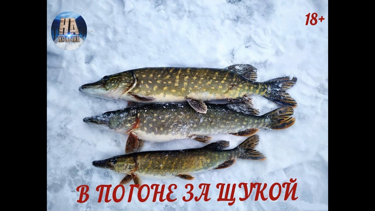 Рыбалка зимняя в ленобласти