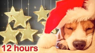 CHRISTMAS LULLABIES ✰ 12 HOURS ✰ Puppy Sleeping Music ♫ Peaceful sleep music for dogs, pets, babies