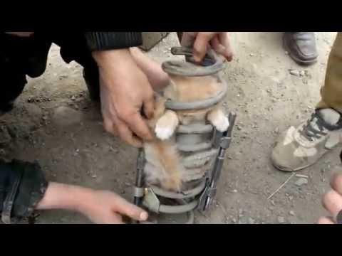 Спасувањето на слаткото мало маче заглавено во автомобилскиот амортизер