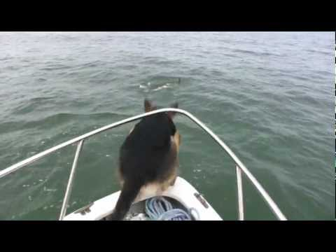 Пес друг дельфинов :)