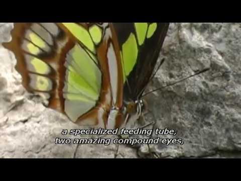 God of Wonders - Spanish Audio English Subtitles